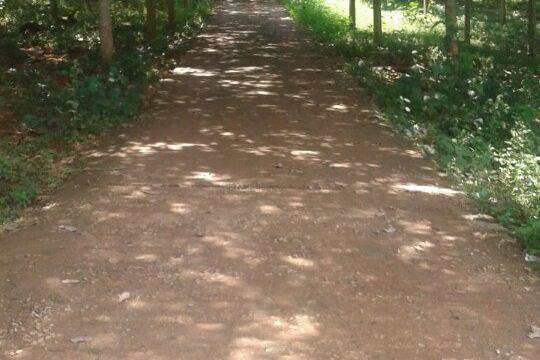 Bán rẫy cao su tại Phường Nghĩa Phú