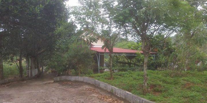 Cho thuê trang trại chỉ việc vào ở và làm tại xã Đắk RMoan