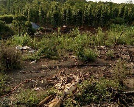 Cần bán gần 3,5 ha đất rẫy Gia Nghĩa