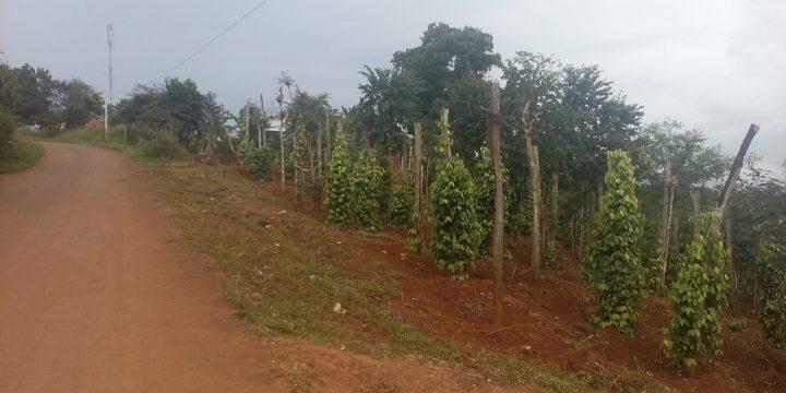 Bán đất nông nghiệp gần đường lớn Gia Nghĩa